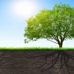 Get to the Root Cause with Functional Medicine