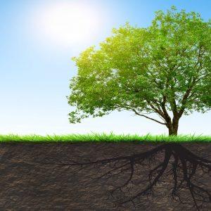 Functional Medicine Root